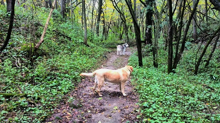Dogs in the trail