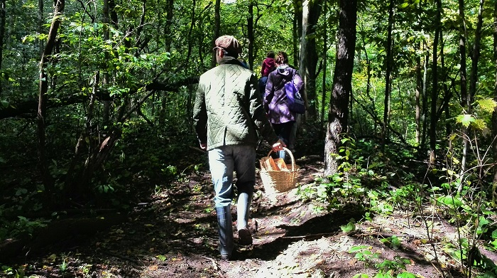Mushroom hunting in a forest near Stratford Ontario