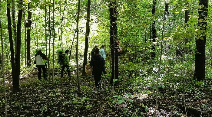 The foraging caravan - foraging for mushrooms near Stratford Ontario