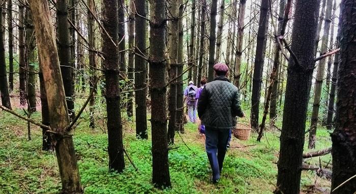 Walking through the trees near Stratford Ontario