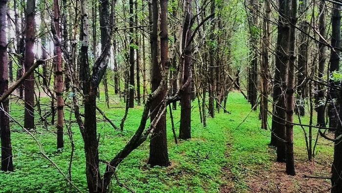 Wyldwood Conservation area