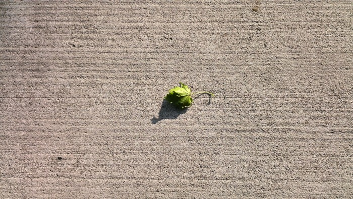 Lonely leaf signifies fall is here in London, Ontario