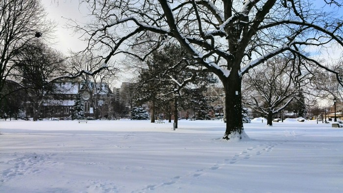 Snow covered trees - winter in Victoria Park, London Ontario