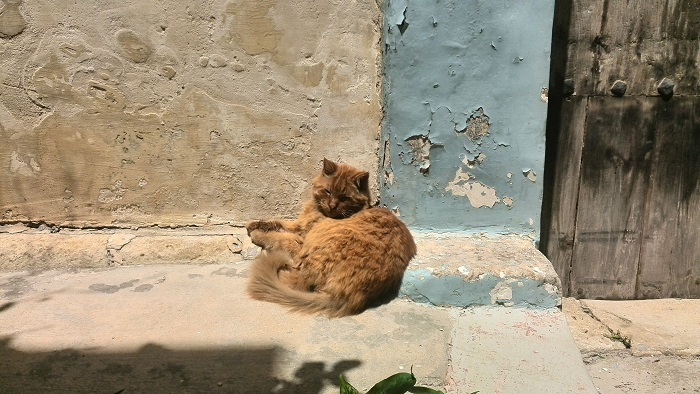 Stray cat in the Silent City Mdina Malta
