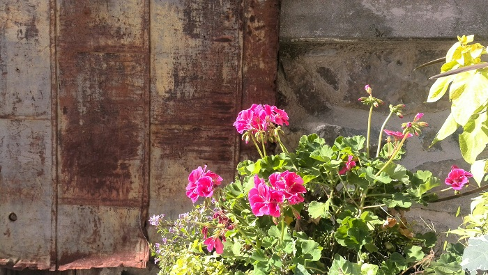 Flowers, Alton Mill Art Centre, Caledon