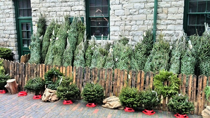 Christmas trees for sale, Christmas Market, Distillery District, Toronto